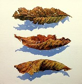 Three Small Dried Leaves.