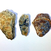 Four Shells and a Stone.