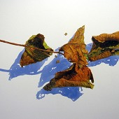 Four Dried Leaves.