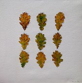 Nine Oak Leaves.